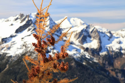 Larch Cones on Carne Mountain