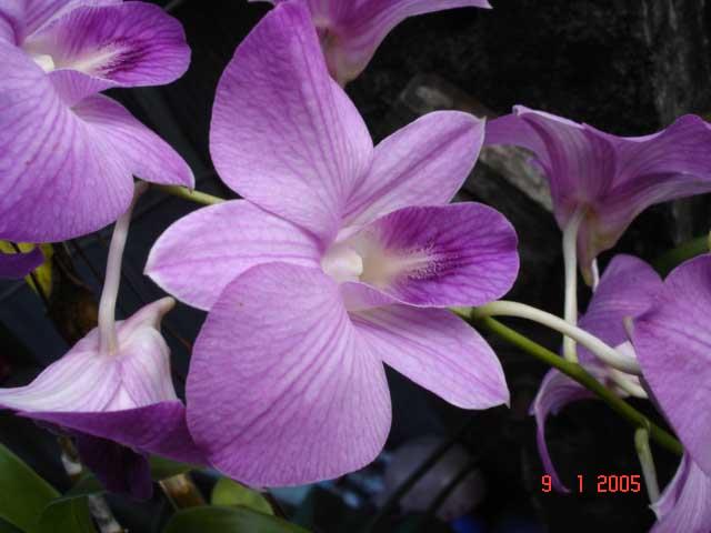 koleksi gambar bunga