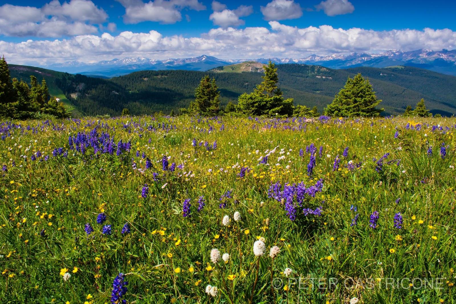 Shrine Ridge. Vail, Colorado | Colorado Landscape Photographer Peter Castricone