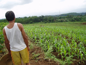 Kebun jagung