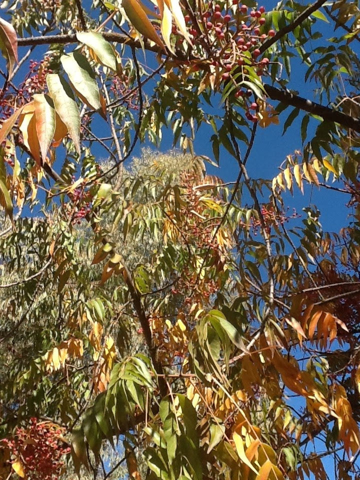 song of the barren orange tree My tree planting experience in the tree planting song of the barren orange tree analysis banyan tree your testimonials haven't found the essay you want.