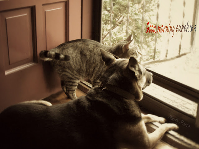jammers and vladimir:  the cat and the dog