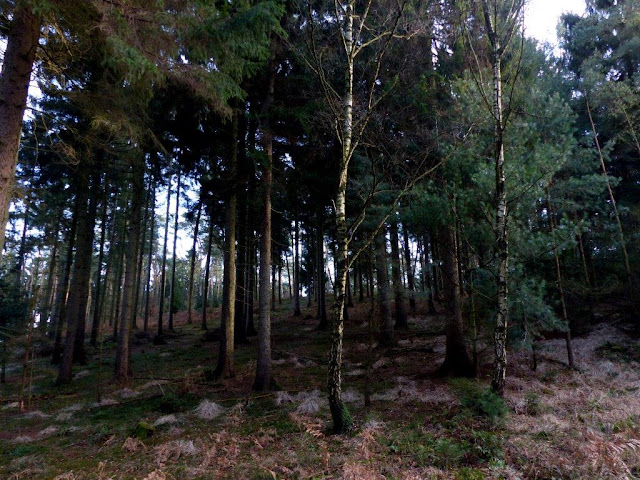 Haard Naturpark Hohe Mark Kreis Recklinghausen Ruhrgebiet Wandern Hunderunde Wald