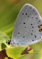 Photo papillon gros plan, tête et détail des ailes