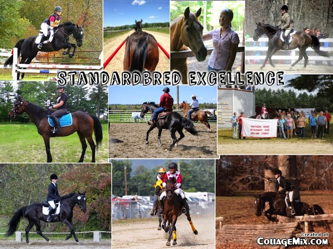 Standardbred Excellence