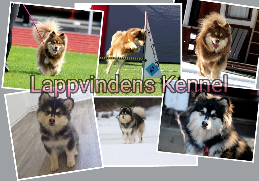 Lappvindens Kennel