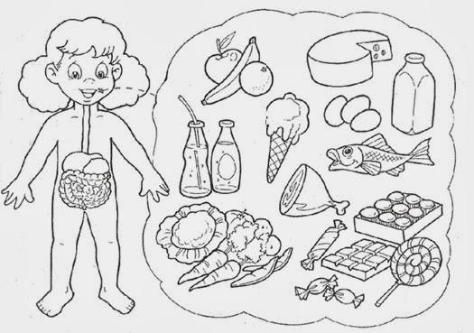 Sistema digestivo para colorear para niños con sus partes - Imagui
