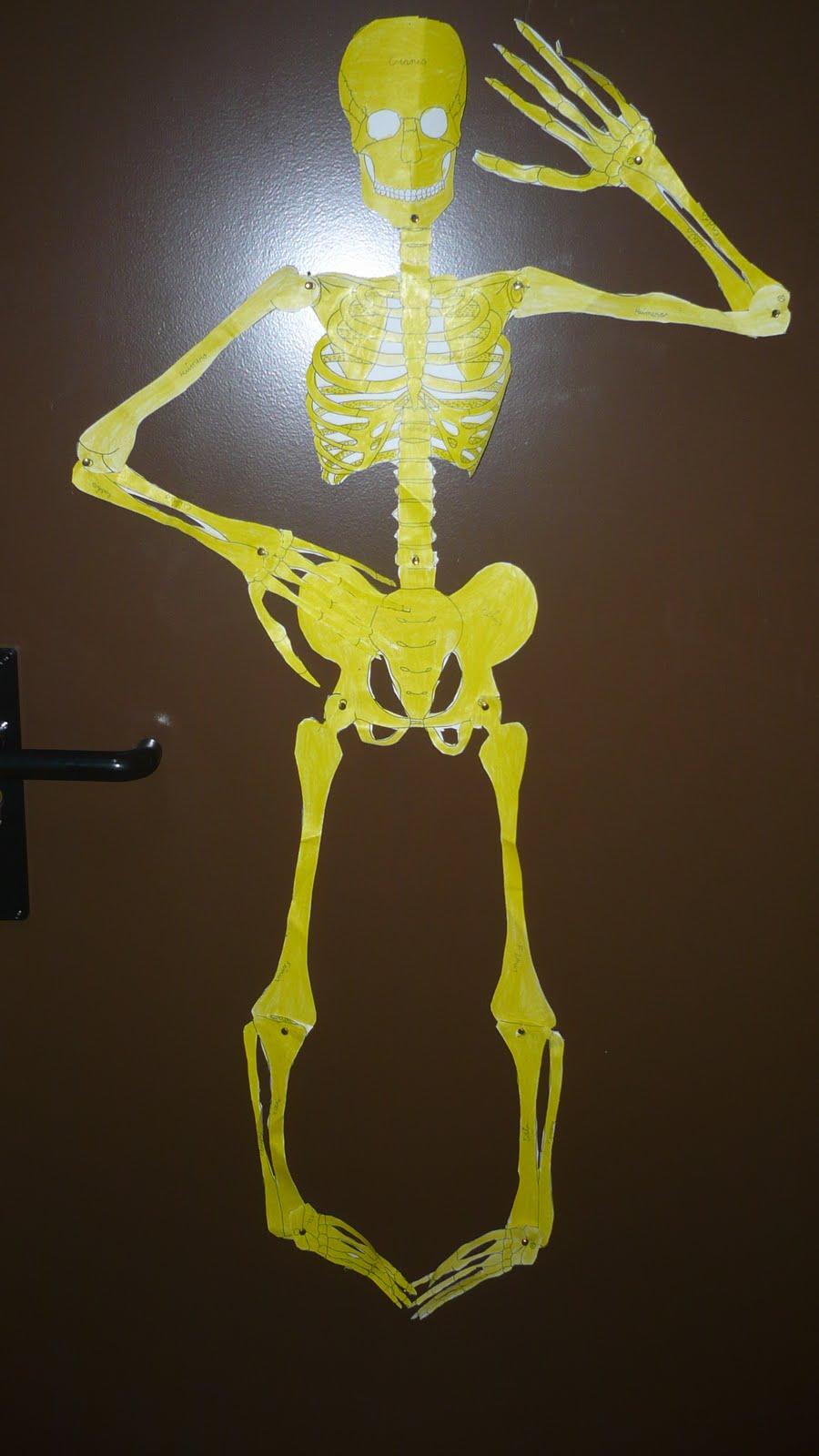 Esqueleto Humano Hecho Con Material Reciclable | MEJOR CONJUNTO DE