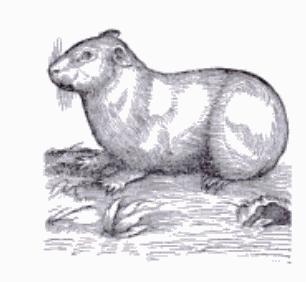 fotos de animales oviparos - informacion sobre animales oviparos MyMadrid