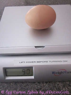 Super large eggs from chickens explained