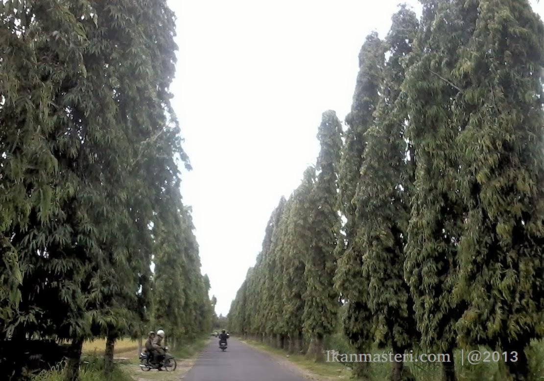 Lorong Koridor