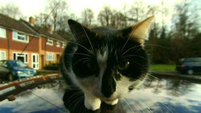 kucing narsis