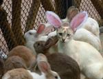 Le lapin!