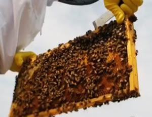 usaha ternak lebah