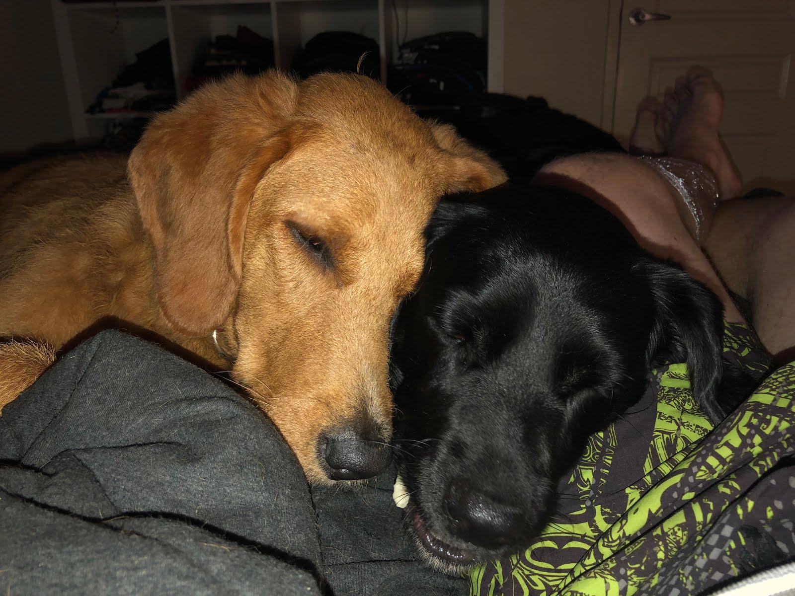 Brooklyn and Harley (the fur babies)