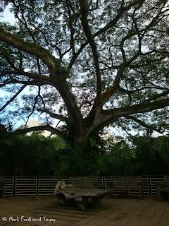 Singapore Botanic Gardens Photo 9