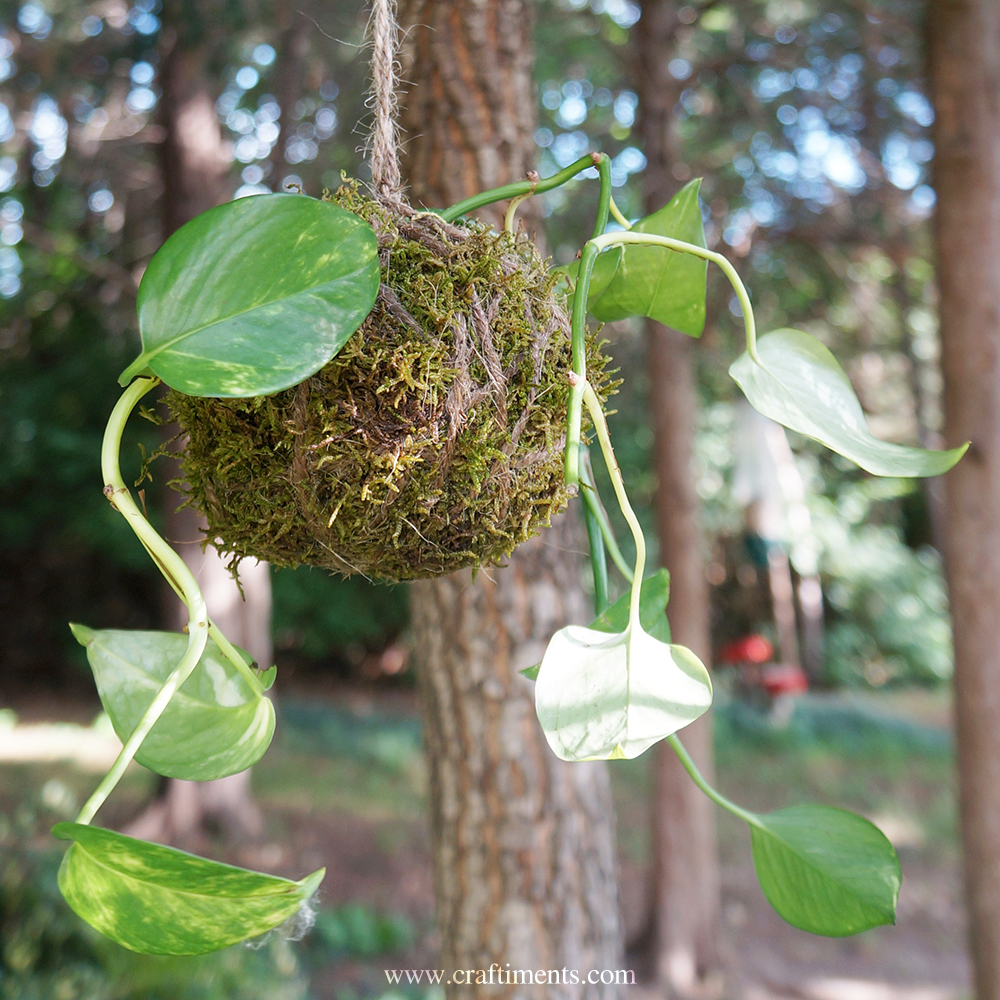 Craftiments:  Create beautiful and frugal string gardens with kokedama made from house plant cuttings