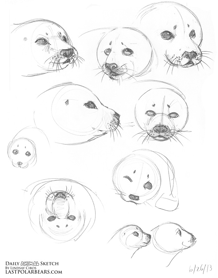 The gallery for --> Baby Arctic Seal Drawing Baby Arctic Seal Drawing
