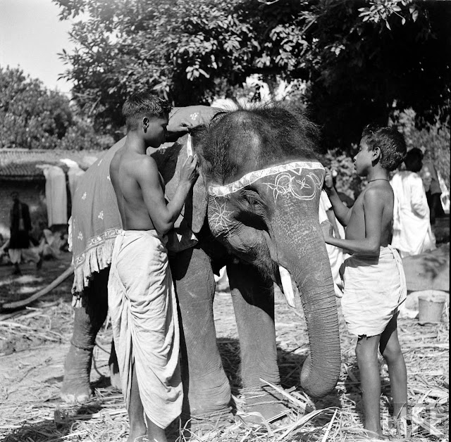 Elephants+in+Sonepur+Cattle+Fair+in+Bihar+-+1952+%2528101%2529