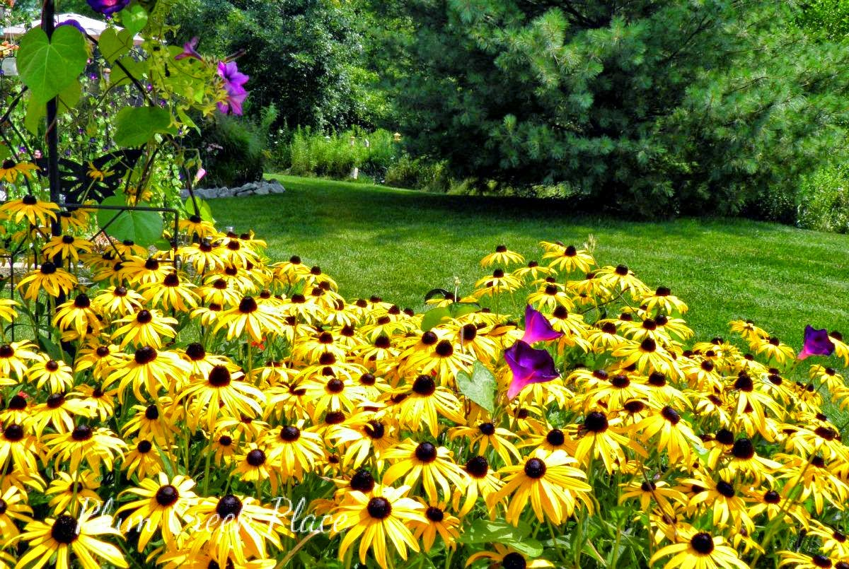 Plum Creek Place, patio, landscape, black eyed Susan's
