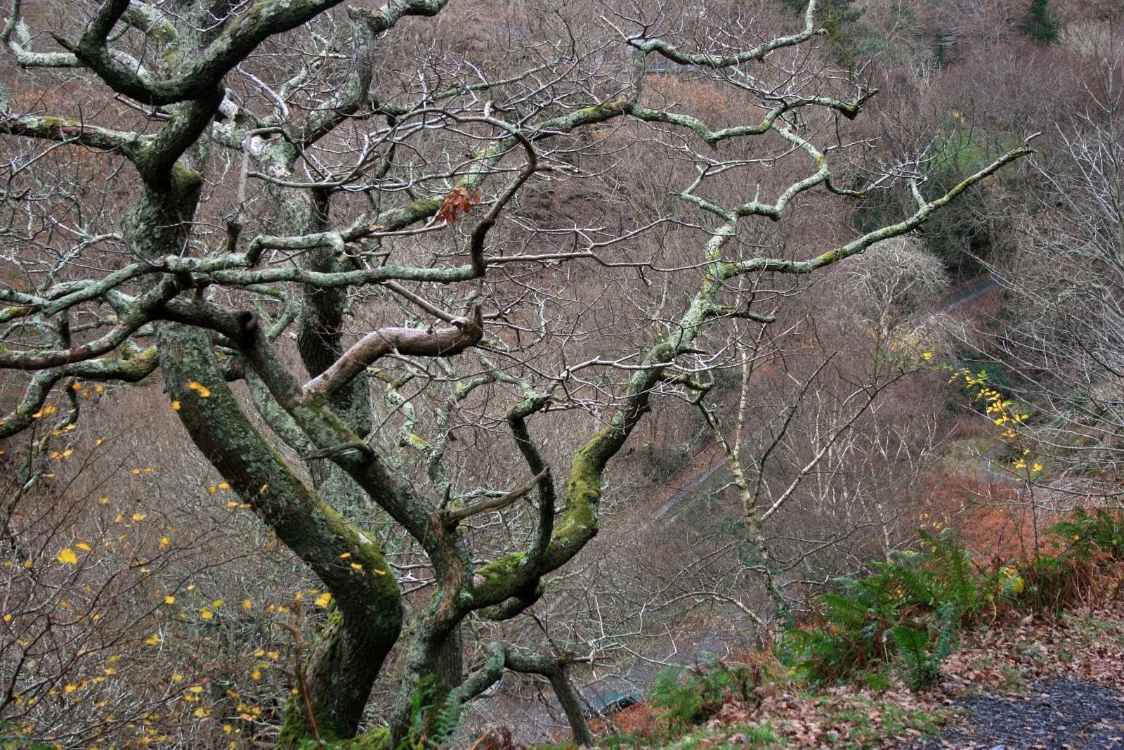 talybont Woods