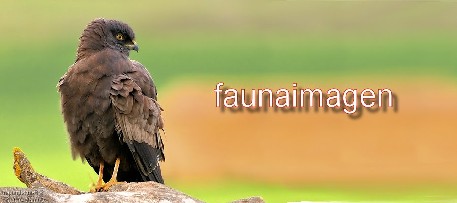 FaunaImagen