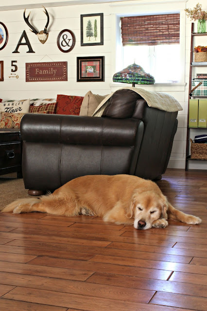 Sleeping golden retriever in family room-www.goldenboysandme.com