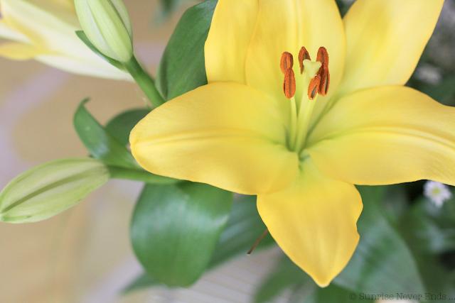fleurs,lys,jaune,yellow,sunday