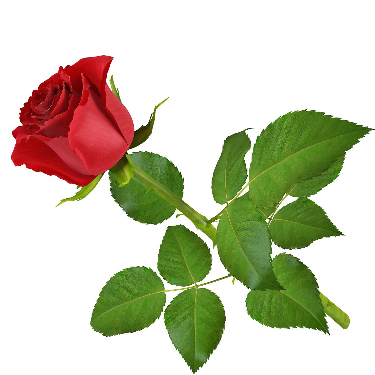 rose11 1 2 - Lovly Red Rose