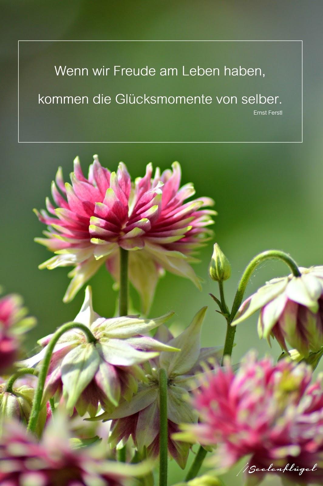 Seelenfl gel zitate - Blumen zitate ...