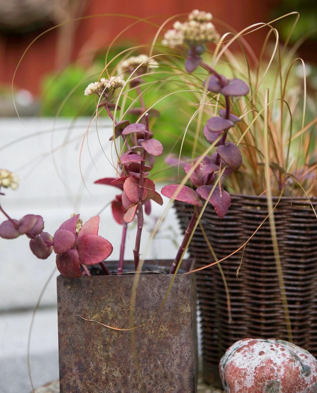 Glädjekällans trädgårdsblogg: augusti 2014