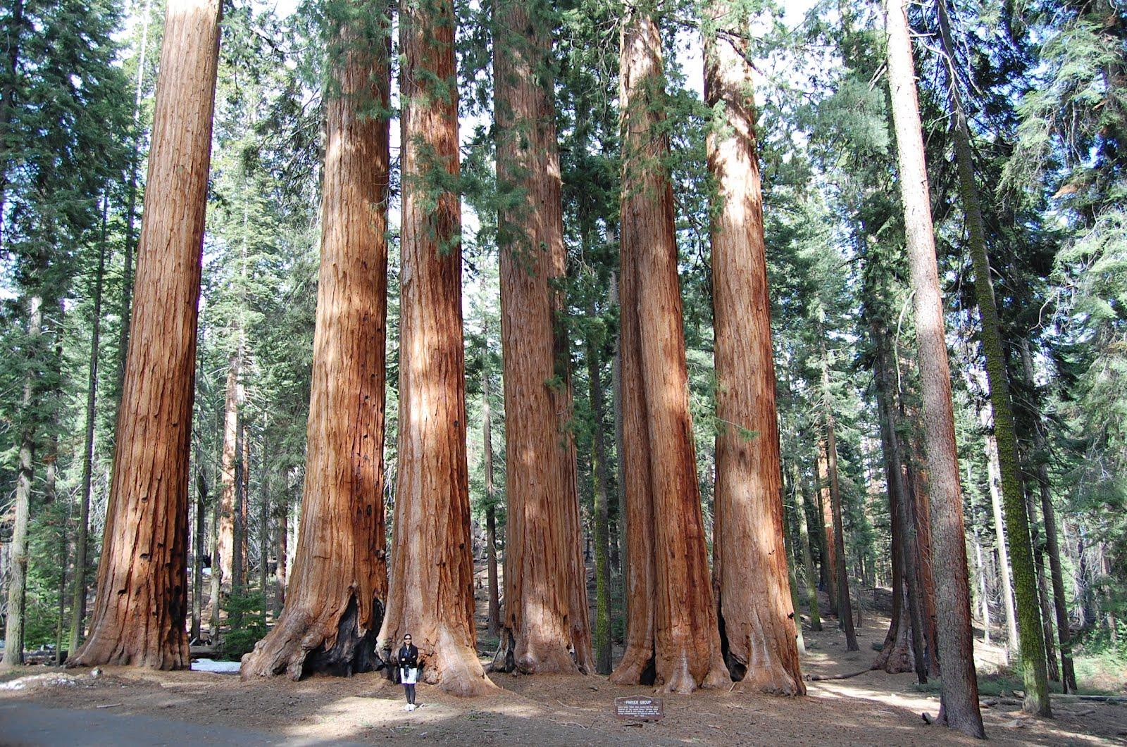 big sur redwood national park images