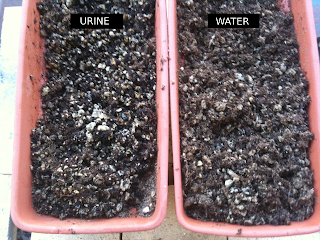 Experiment (urine) and control (water) troughs