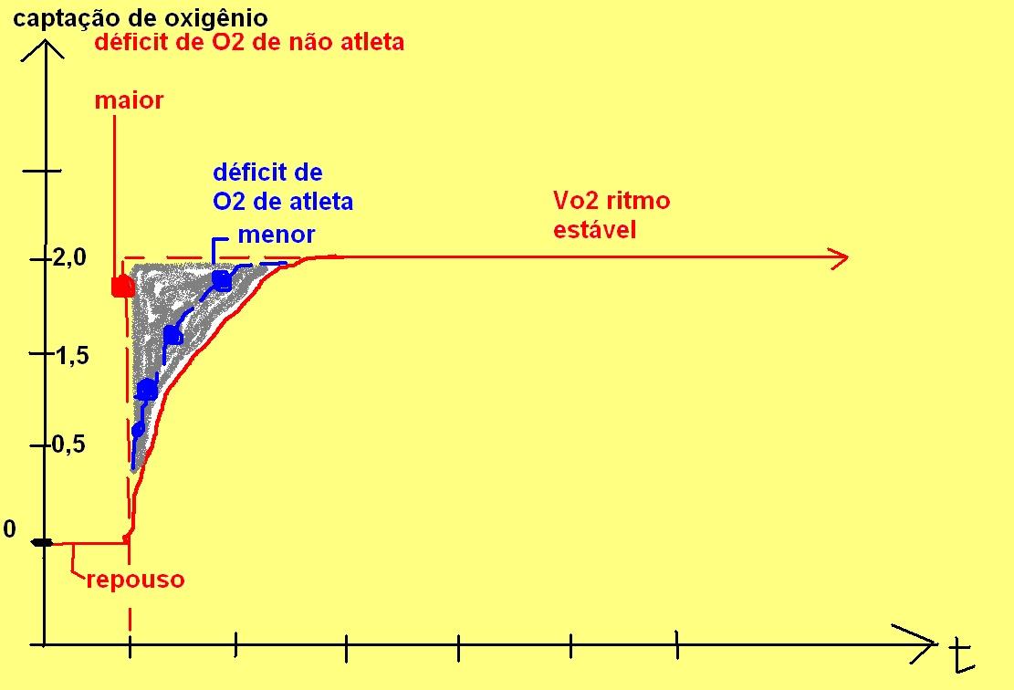 fisio ex logia  metabolismo energ u00e9tico 4  consumo de