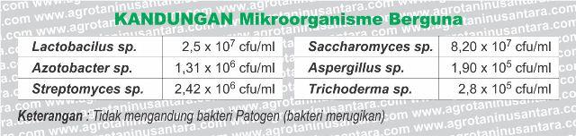 Kandungan Mikroorganisme Berguna pada Tangguh Probiotik