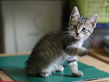 Apprentice-Ivypaw-she-cat
