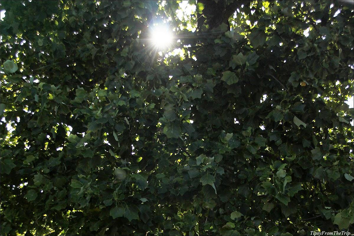 Summer sun, North California