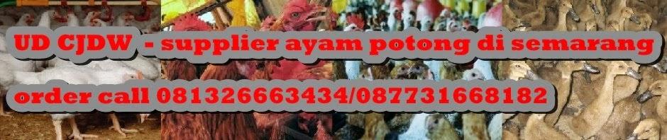 jual ayam potong I  ayam potong  murah  I suplier ayam potong di semarang I harga ayam potong