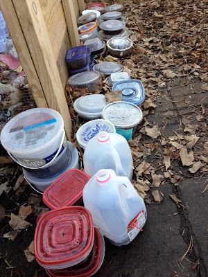 Winter sown containers in garden
