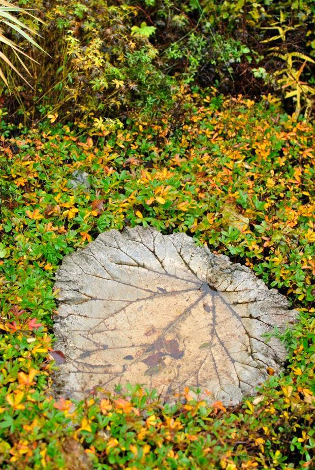 rabarberblad av betong diy höst trädgård