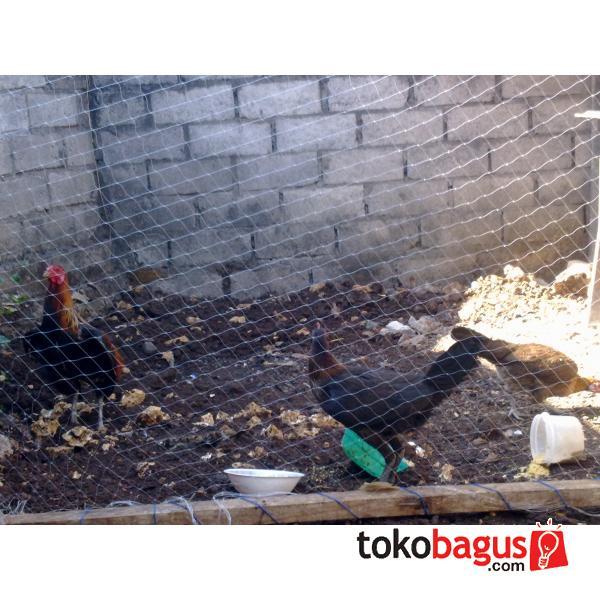 Ayam Aduan Super 2014