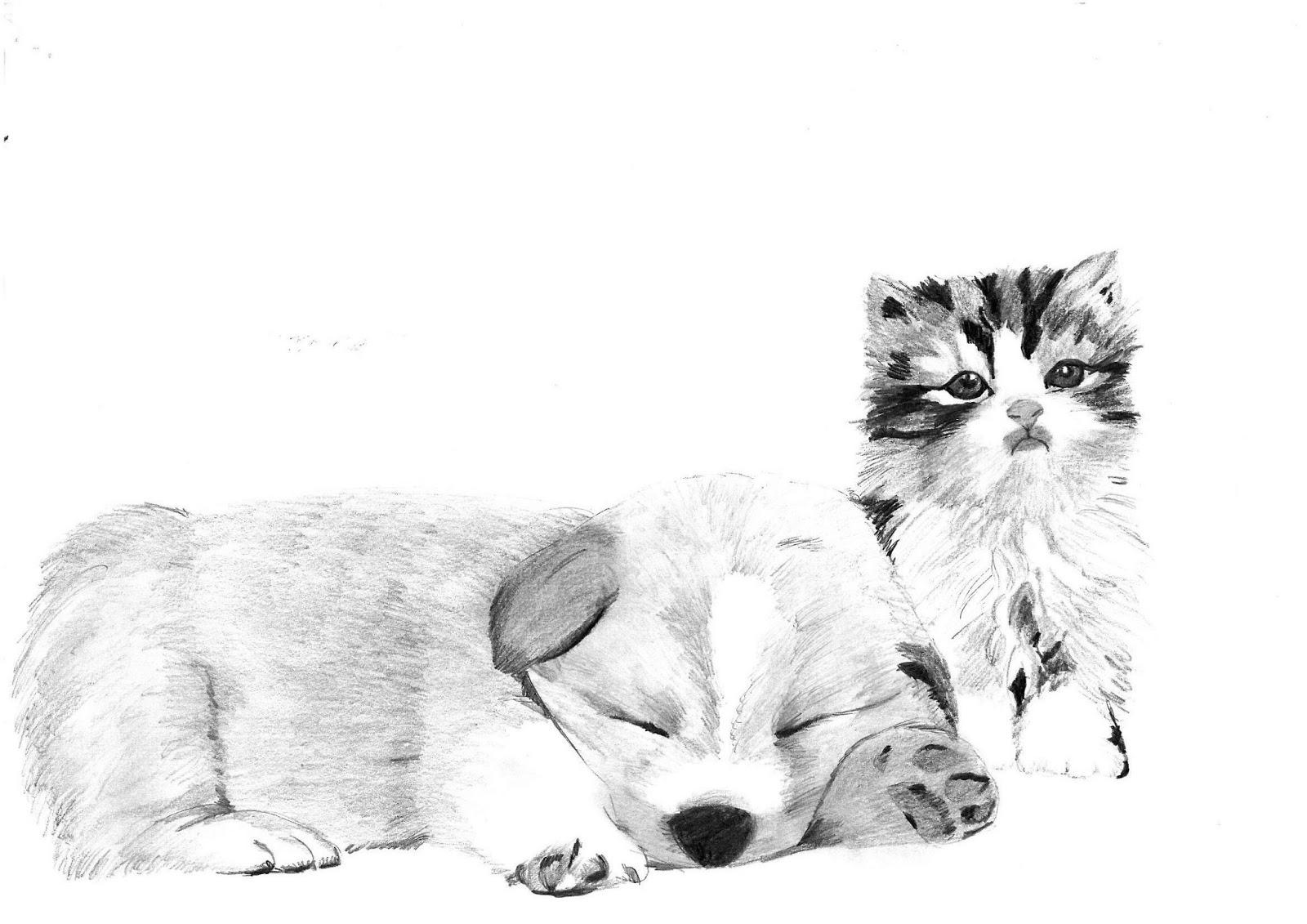 Laura Disegna Cane E Gatto Chi Lha Detto Che Non Si Può