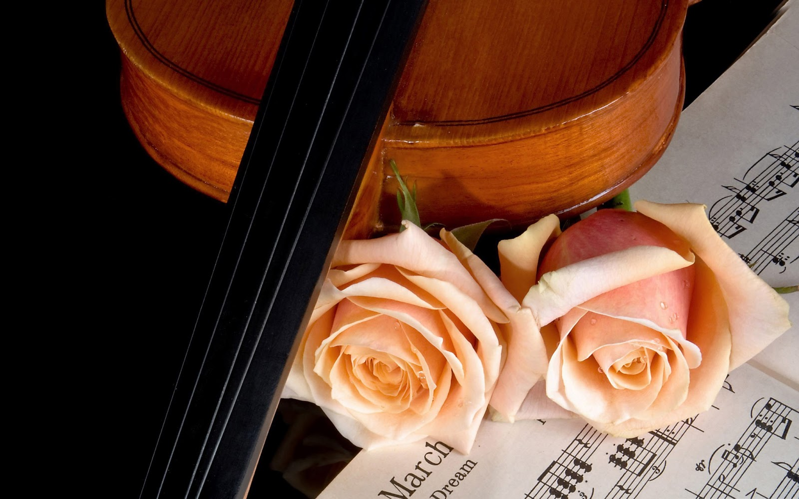 Violin Pictures Wallpapers 500 Collection Hd Wallpaper