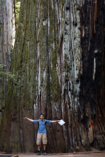 giant tree humboldt redwoods state park