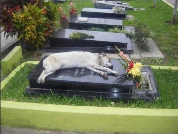 Dog on the grave of his master.