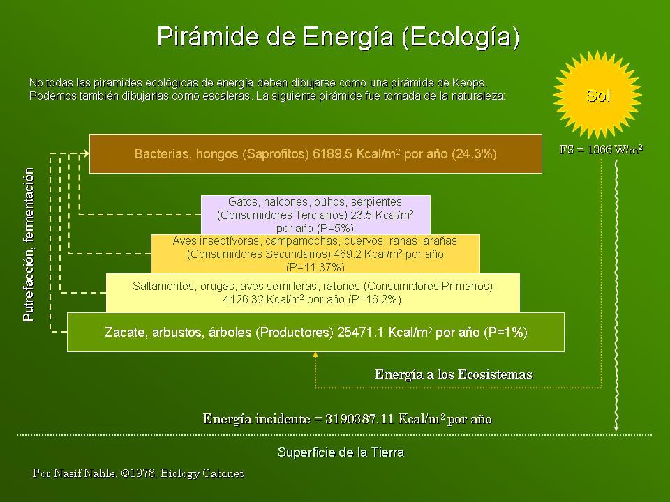 TEMAS DE CIENCIAS NATURALES: PIRÁMIDE DE ENERGÍA