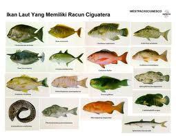 Jenis-Jenis Ikan Laut