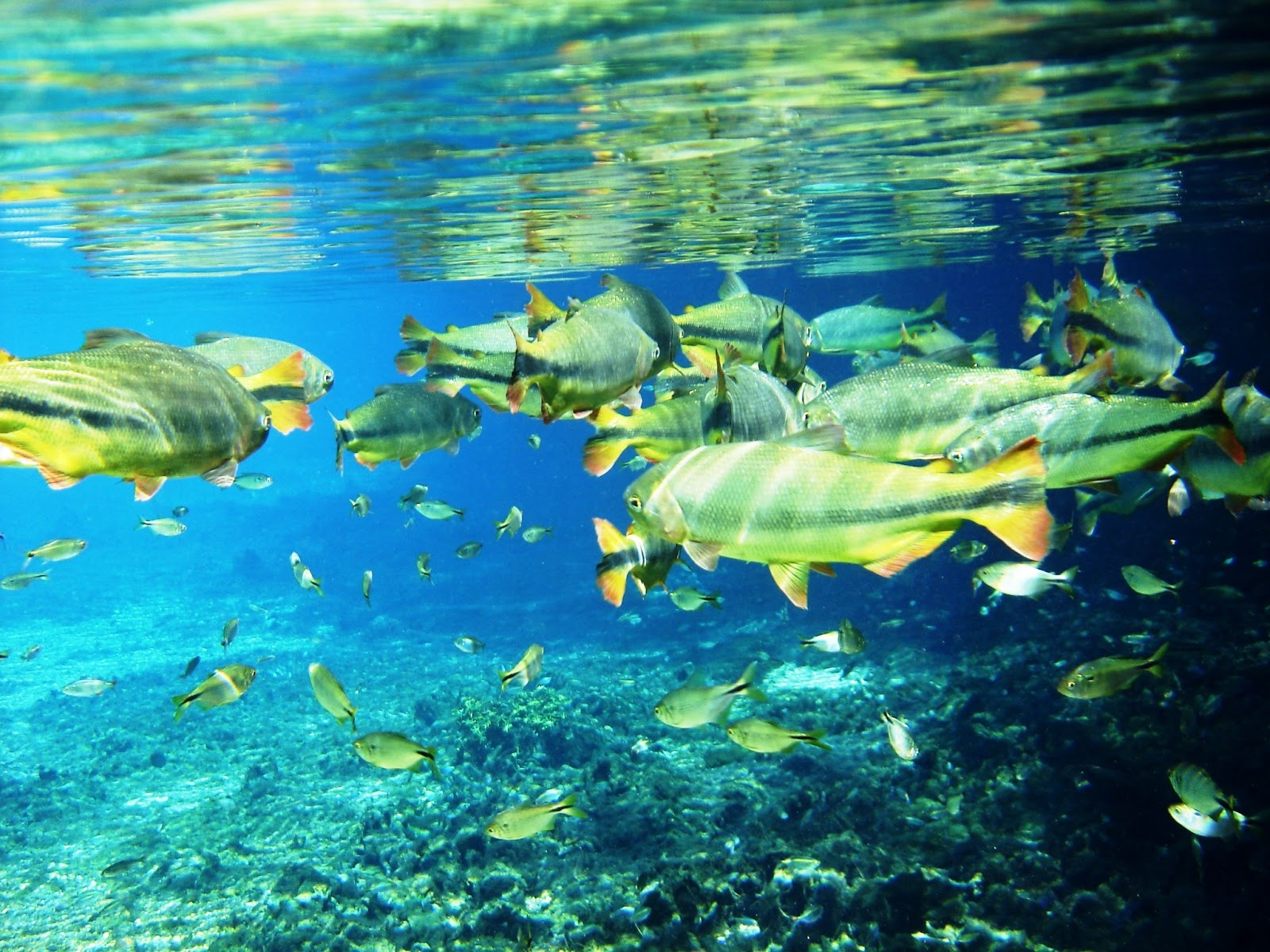 Bonito Brazil  city photos : ... : Great Things To Do In Brazil – Snorkelling the Rivers of Bonito