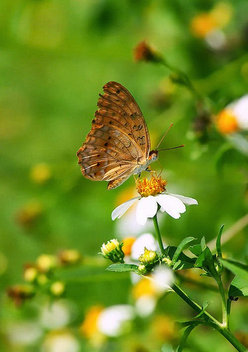 De hermosas y vistosas alas