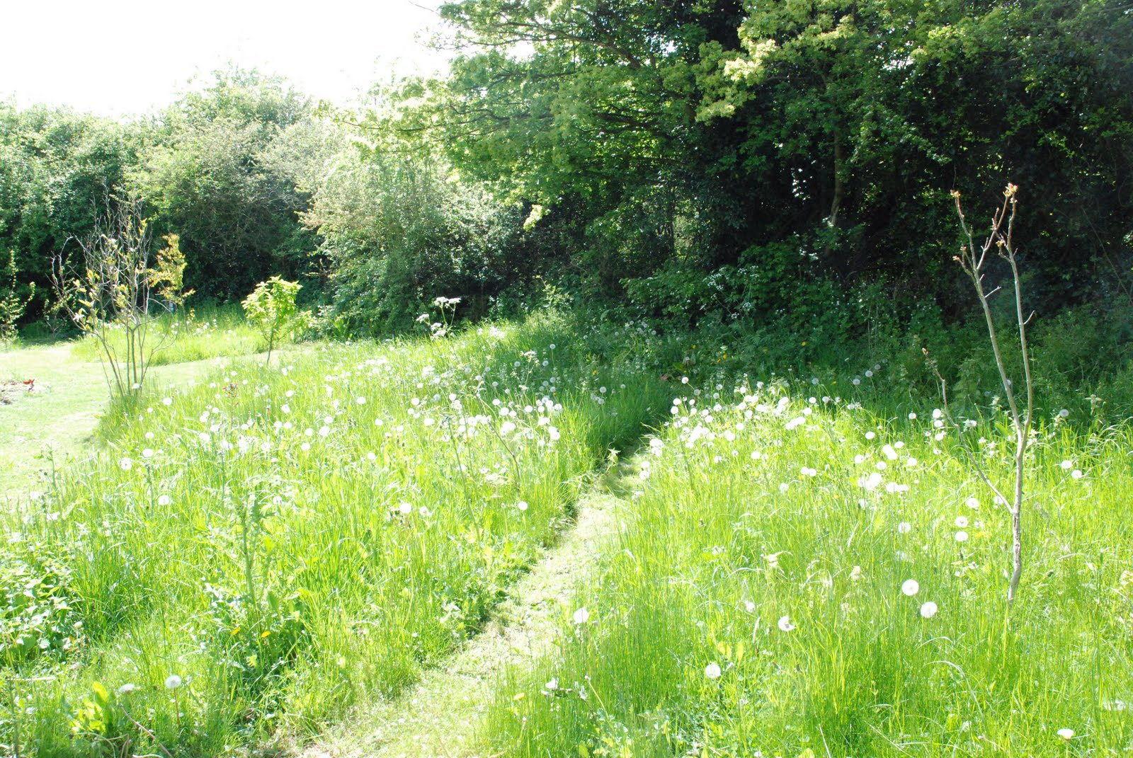 The wild meadow for Wild grass gardens